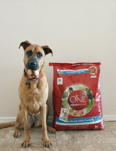 Dakota and the Purina One 28 Day Challenge